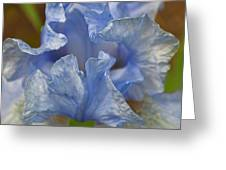 Blue Lilac Iris Greeting Card