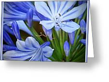 Blue Lilie Greeting Card