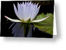 Blue Lily 4461 Greeting Card