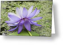 Blue Lotus Seen From Behind Greeting Card