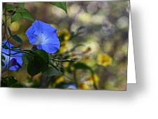Blue Morning Glories Greeting Card by Linda Unger