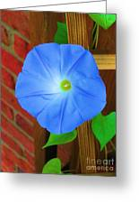 Blue Morning Glory  Greeting Card