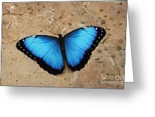 Blue Morpho #2 Greeting Card