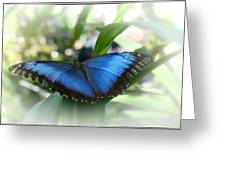 Blue Morpho Butterfly Dsc00575 Greeting Card