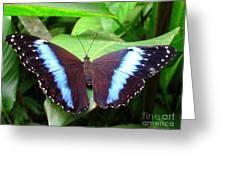 Blue Morpho I Greeting Card