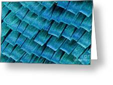 Blue Morpho Wing Scales Greeting Card