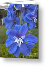 Blue On Blues Greeting Card