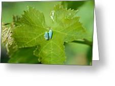 Blue On Green Greeting Card by Fraida Gutovich