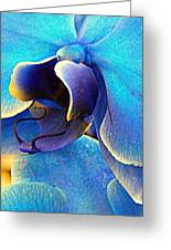 Blue Orchid Macro Greeting Card