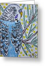 Blue Parakeet Greeting Card