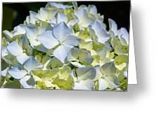 Blue Pastel Floral Art Prints Hydrangea Flowers Greeting Card