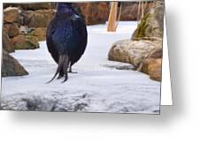 Blue Pheasant  Greeting Card