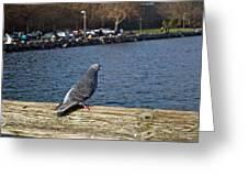 Blue Pigeon Greeting Card