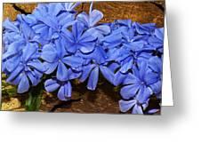 Blue Plumbago Greeting Card