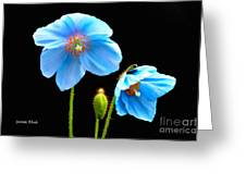 Blue Poppy Flowers # 4 Greeting Card