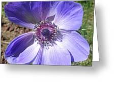Blue Poppy Anemone Greeting Card