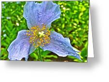 Blue Poppy In Les Jardins De Metis Or Reford Gardens Near Grand-metis-quebec Greeting Card