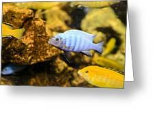 Blue Reef Fish Greeting Card