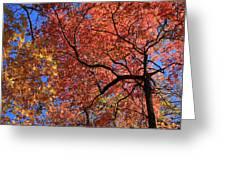 Blue Ridge Mountains Fall Foliage Greeting Card