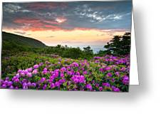 Blue Ridge Parkway Sunset - Craggy Gardens Rhododendron Bloom Greeting Card by Dave Allen