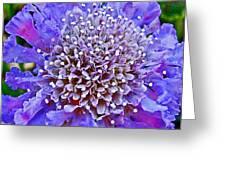 Blue Scabiosa In Park Sierra Near Coarsegold-california   Greeting Card