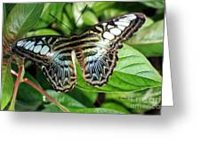Blue Sea Butterfly Greeting Card
