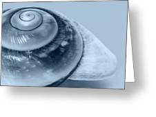 Blue Shell Greeting Card