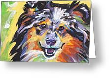 Blue Sheltie Greeting Card