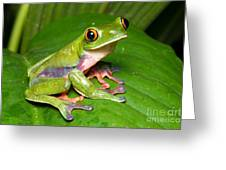 Blue-sided Tree Frog Greeting Card