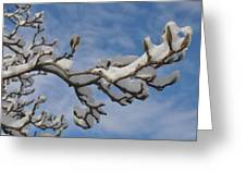 Blue Skies In Winter Greeting Card