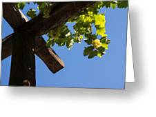 Blue Sky Grape Harvest - Thinking Of Fine Wine Greeting Card