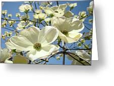 Blue Sky Spring White Dogwood Flowers Art Prints Greeting Card