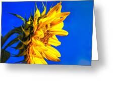 Blue Sky Sunshine Sunflower Greeting Card