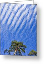 Blue Sky White Clouds Green Trees Greeting Card