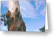 Blue Sky With Paper Bark Greeting Card