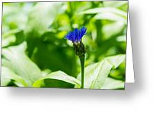 Blue Spot In The Green World - Featured 3 Greeting Card