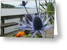 Blue Star Sea Holly Greeting Card