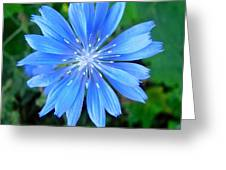 Blue Star Greeting Card