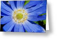 Blue Swan River Daisy Greeting Card