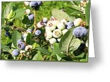 Blue Sweetness Greeting Card