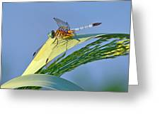 Blue Tail Dragonfly On Navarre Beach Greeting Card