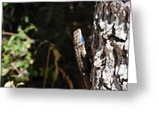 Blue Throated Lizard 1 Greeting Card