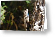 Blue Throated Lizard 2 Greeting Card