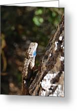 Blue Throated Lizard 4 Greeting Card