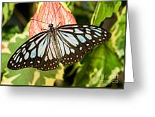 Blue Tiger Butterfly Greeting Card