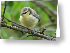 Blue Tit In A Cherry Tree Greeting Card