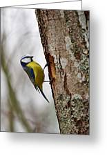 Blue Tit Searching Home Greeting Card