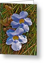 Blue Trumpet Vine In Manuel Antonio's Butterfly Botanical Garden-costa Rica Greeting Card