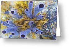 Blue Tube Group Greeting Card