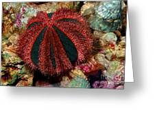 Blue Tuxedo Sea Urchin Greeting Card